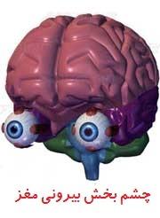 مغز و چشم