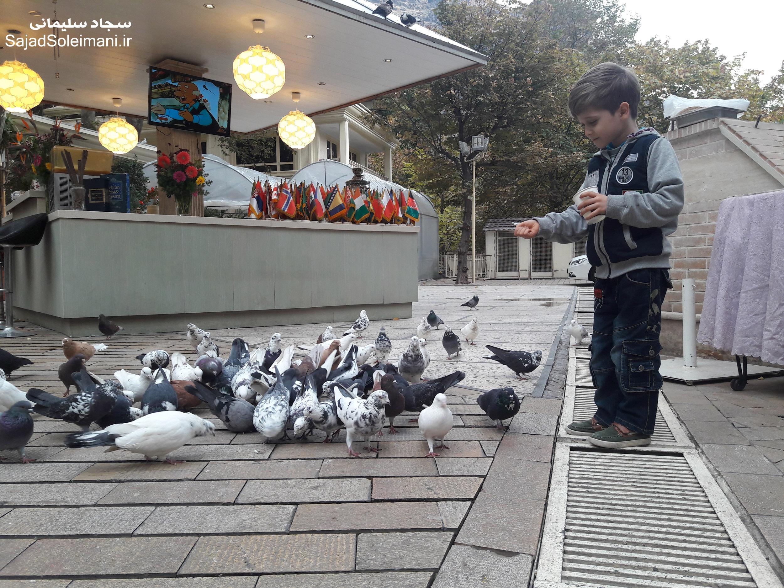 لذت مهربانی و دان پاشی در هوای سرد پاییزی